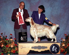English Setter - CaRob Takin Care of Business